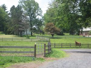 Flying Horse Farm Pasture