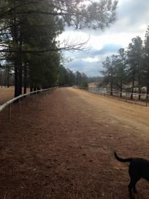 Track at Sandy Hills