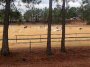Jump arena at Sandy Hills